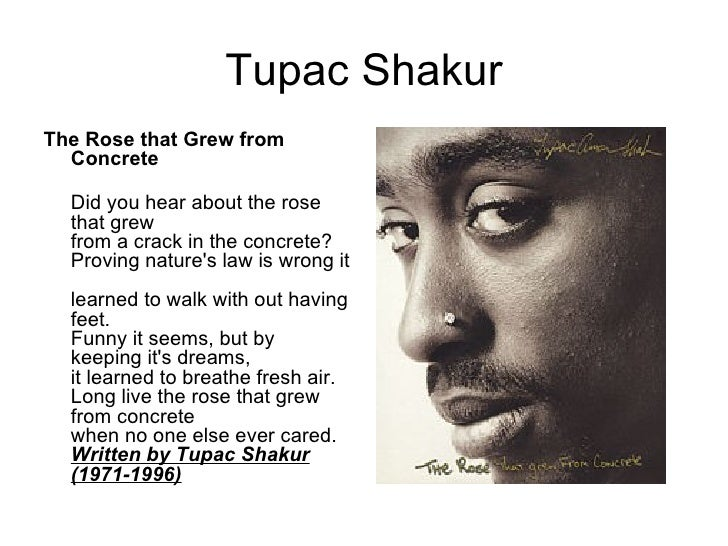 2pac the rose that grew from concrete book pdf